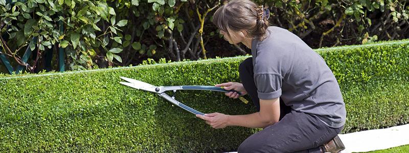 Tips para el cuidado del jardín en el mes de junio