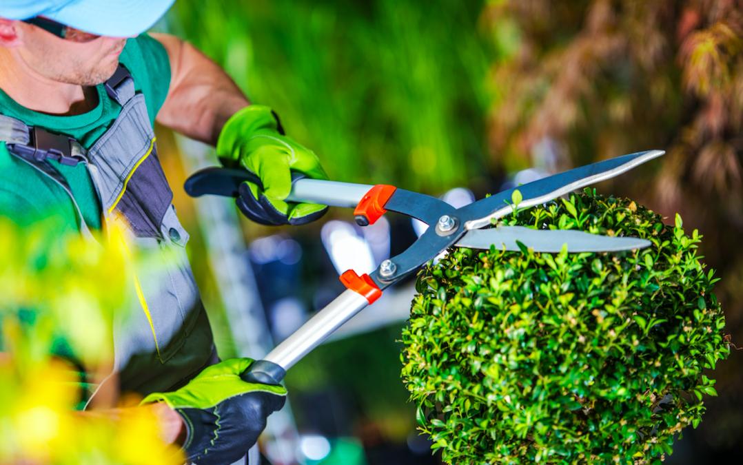 Un servicio de jardinería perfecto:  ¿sabes cómo tiene que ser?